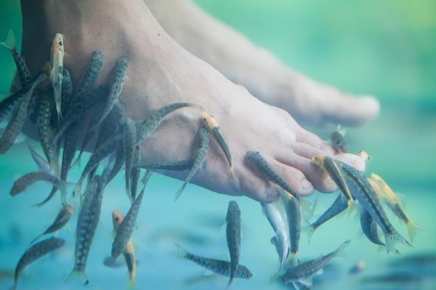 Pedicure rybne spa, rybki pedicure spa, masaż pedicure rybny rufa garra, zbliżenie stóp i ryb w wodzie.