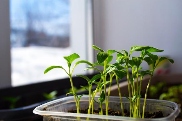 Pędy roślin wiosenne sadzonki narodziny nowego życia