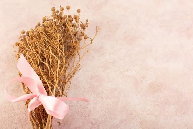 Peganum harmala roślina suszona na różowym drzewie ze zdjęciami roślin stołowych