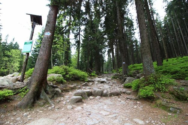 Pejzaż strzał wysokich drzew z dużymi skałami na czystym niebie