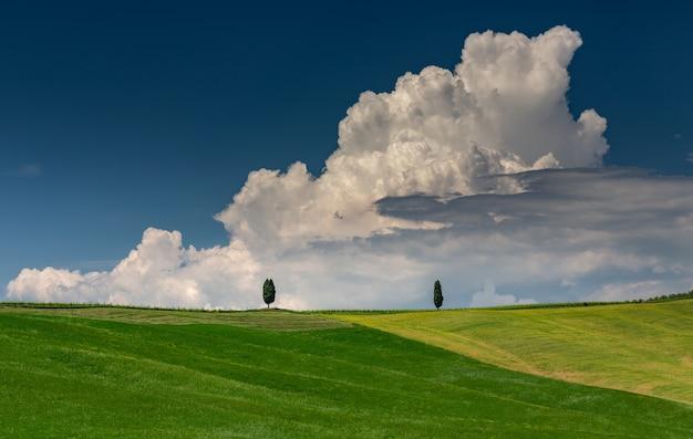 Pejzaż strzał zielonego wzgórza z dwoma zielonymi drzewami w toskanii val d'orcia we włoszech