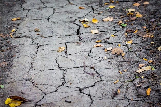 Pęknięcia w glebie z powodu suszy, rok jałowy_