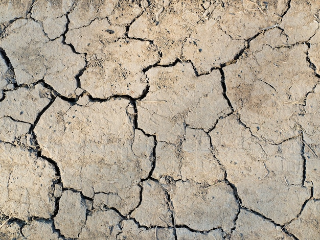 Pęknięta tekstura ziemi z roślinami