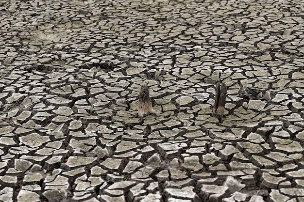 Pęknięty suchy ląd bez wody. ściana abstrakcyjna