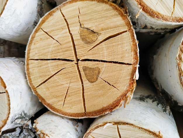 Pęknięty zbliżenie dziennika brzoza. okrągłe pierścienie z teksturą drewna w paski.