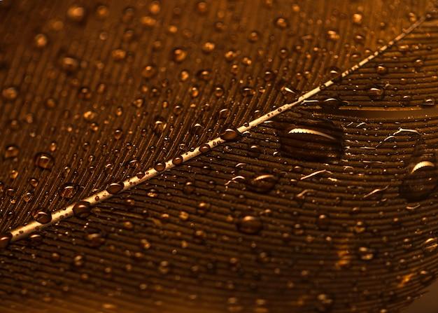 Pełna klatka kropli wody na złotej powierzchni z piór