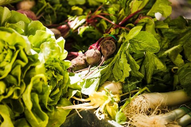 Pełna klatka różnych świeżych warzyw liściastych na sprzedaż