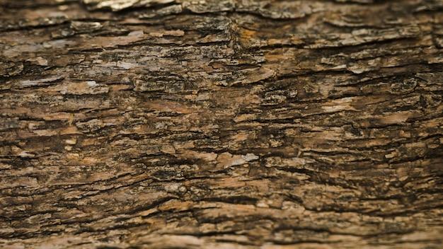 Pełna klatka starego pnia drzewa