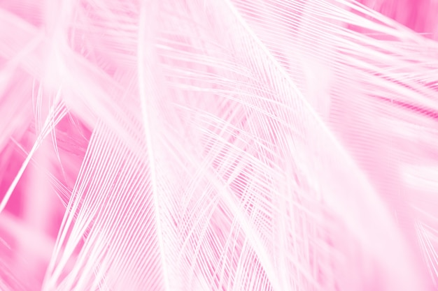 Pełna klatka strzał różowe pióro