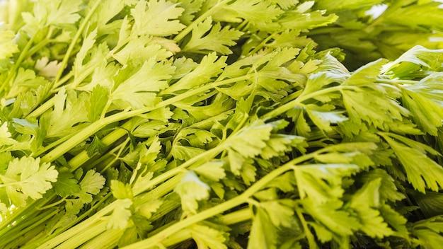 Pełna klatka zielonej świeżej pietruszki do sprzedaży na rynku