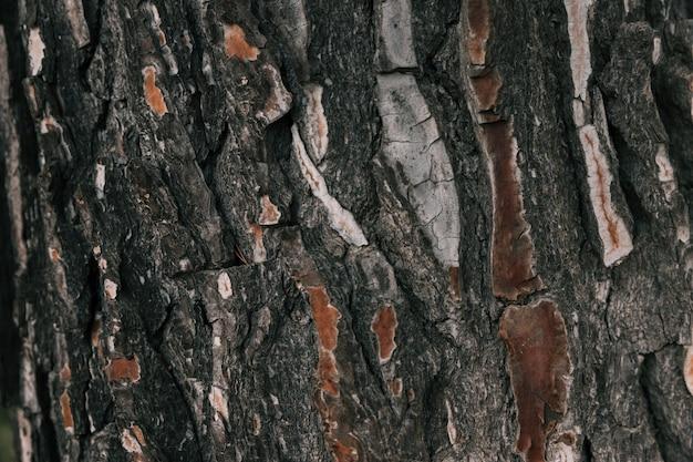 Pełna rama makro tekstury kory drzewa