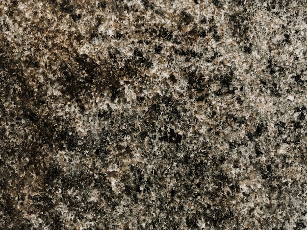 Pełna rama mchu rosnącego na skale