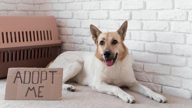 Pełne ujęcie psa siedzącego obok transparentu adoptuj mnie