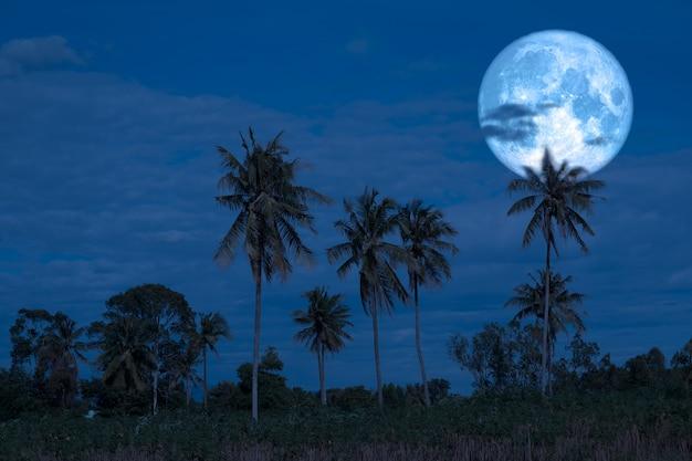 Pełny księżyc jesiotra na nocnym niebie powrót sylwetki drzew kokosowych