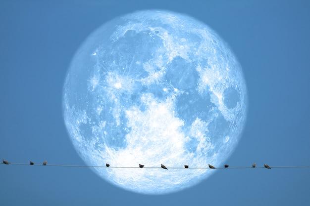 Pełny truskawkowy księżyc z powrotem na sylwetka ptakach na elektrycznym słupa nocnym niebie