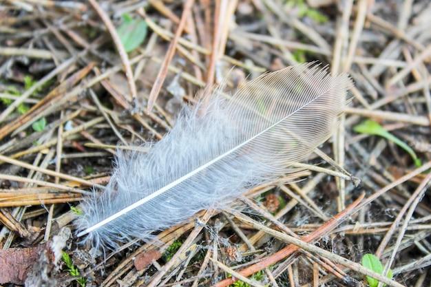 Perot nieznane ptaki leśne na tle zeszłorocznych padłych igieł sosnowych w lesie