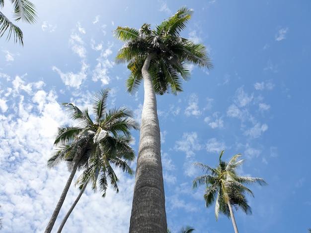 Perspektywa plantacji palm kokosowych na tle błękitnego nieba