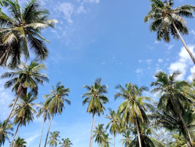 Perspektywa plantacji palm kokosowych w pobliżu plaży na tle błękitnego nieba