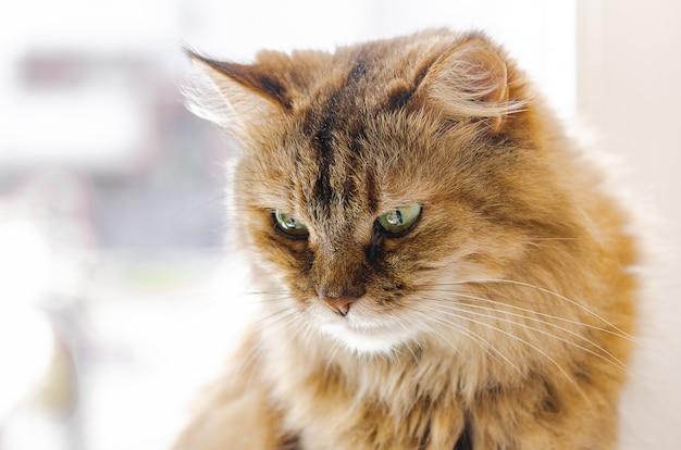 Pet - kot siedzi na oknie i wygrzewa się w słońcu. ulubione zwierzęta, komfort w domu.