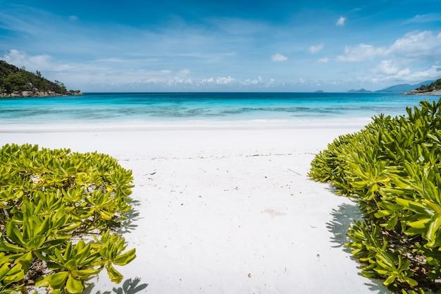 Petite anse piaszczysta plaża z błękitną laguną oceaniczną na wyspie mahe na seszelach. egzotyczne wakacje w tropikach.