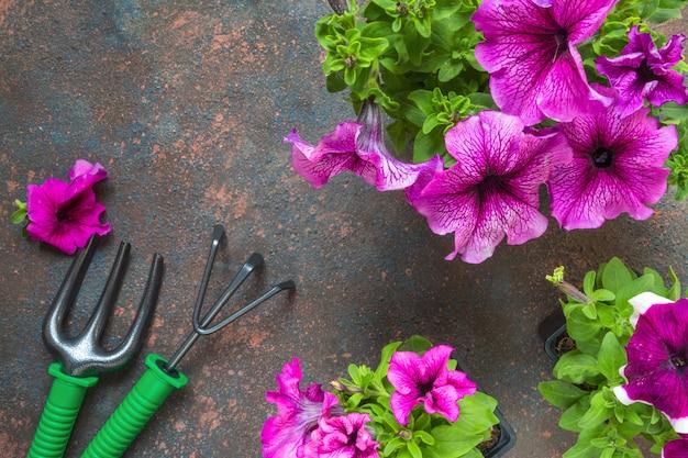 Petunia kwitnie w koszu, słomianym kapeluszu i ogrodowych narzędziach na drewnianym tle.
