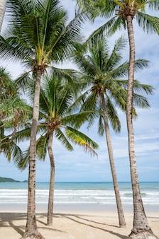 Phuket patong beach letnia plaża z palmami wokół w patong beach phuket wyspa tajlandia, piękna tropikalna plaża z tło błękitnego nieba w sezonie letnim skopiuj miejsce.
