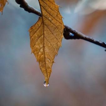 Piękne brązowe drzewo pozostawia w naturze
