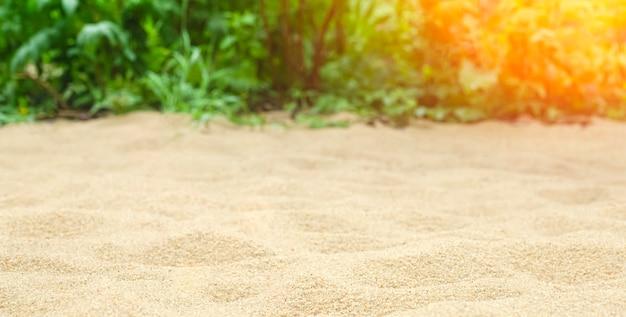 Piasek na tle plaży z tropikalnymi roślinami w lecie pod słońcem. lato, tropiki, słońce, koncepcja ciepła. zdjęcie wysokiej jakości
