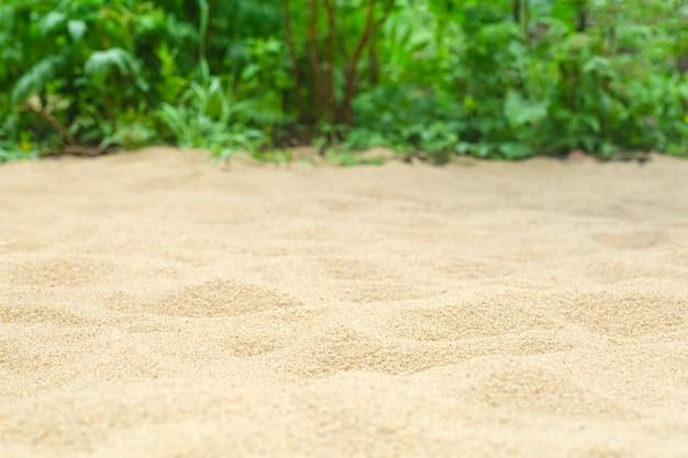 Piasek na tle plaży z tropikalnymi roślinami w lecie pod słońcem. lato, tropiki, słońce, koncepcja ciepła.