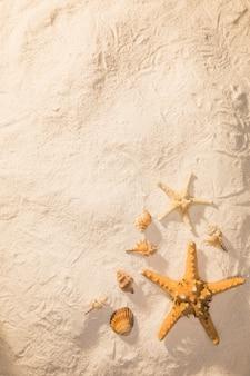 Piasek z suszonymi stworzeniami morskimi