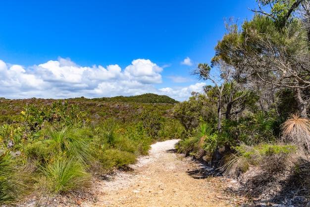 Piaskowaty wycieczkuje ślad przez lasowego noosa parka narodowego w queensland, australia