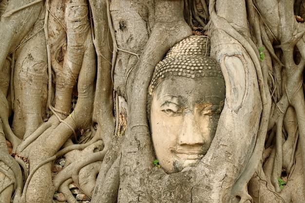 Piaskowcowa buddha wizerunku głowa uwięziona w drzewnych korzeniach przy wata mahathat antyczną świątynią w ayutthaya, tajlandia