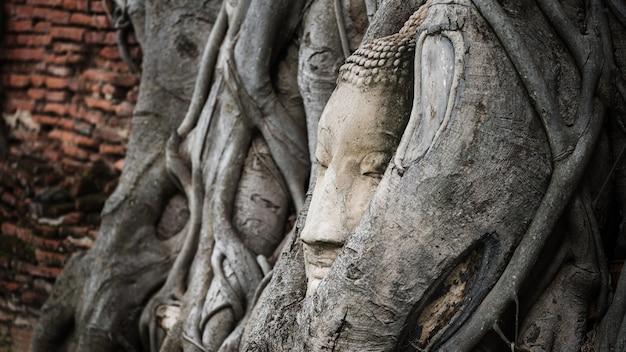 Piaskowiec uśmiechnięta głowa buddy w korzeniu drzewa bodhi w pobliżu starego ceglanego muru w świątyni wat mahathat, ayutthaya, tajlandia, słynnym miejscu podróży w azji południowo-wschodniej.
