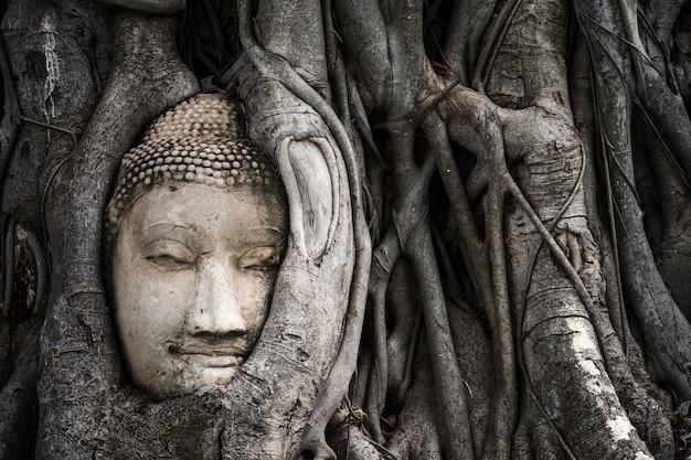 Piaskowiec uśmiechnięta głowa buddy w korzeniu drzewa bodhi w świątyni mahathat, ayutthaya, tajlandia, słynnym miejscu podróży w azji południowo-wschodniej.