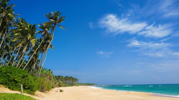 Piaszczysta bezludna rajska plaża z palmami na oceanie