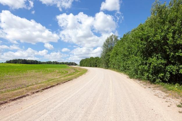 Piaszczysta droga przez pola z kukurydzą i lasem. wiosenny krajobraz