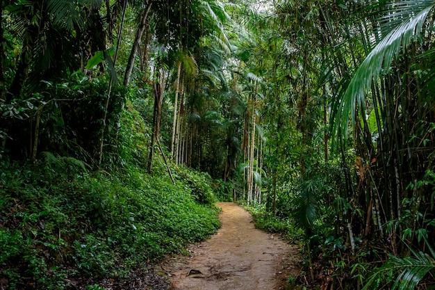 Piaszczysta droga w dżungli.
