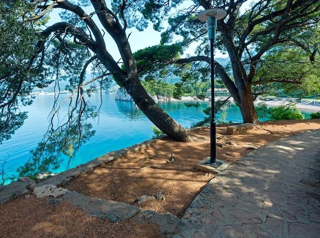 Piaszczysta plaża milocher przez gałęzie sosen w parku (czarnogóra, budva)