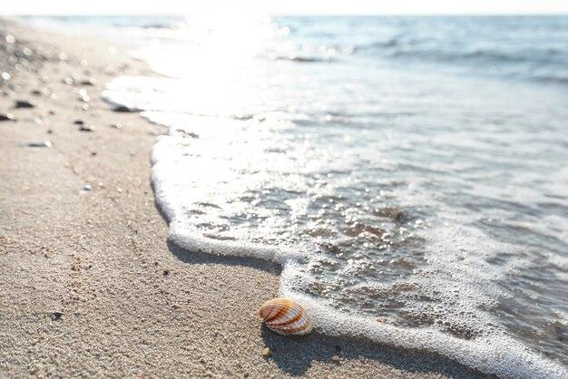 Piaszczysta plaża, muszla omieciona przez falę o zachodzie słońca na bałtyku.