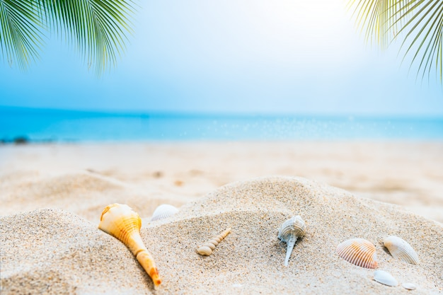 Piaszczysta plaża nadmorska z błękitne niebo i muszla na plaży w sezonie letnim
