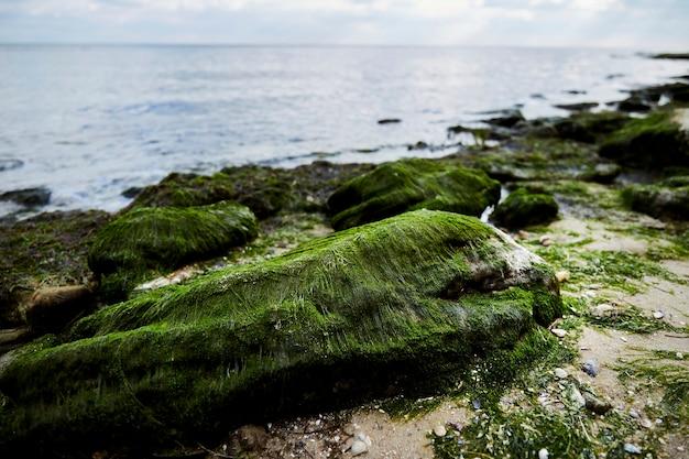 Piaszczysta plaża omszałe skały woda