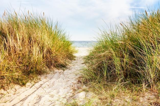 Piaszczysta plaża z wydmami i trawą wydmową. późne lato krajobraz z zachmurzonym niebem. tło wakacje. wybrzeże bałtyku, niemcy, cel podróży