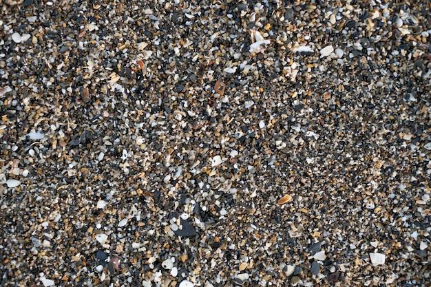 Piaszczyste dno morza z kawałkami małży