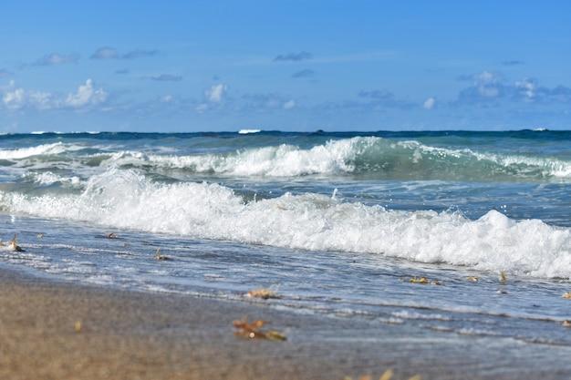 Piaszczyste wybrzeże oceanu atlantyckiego. republika dominikany