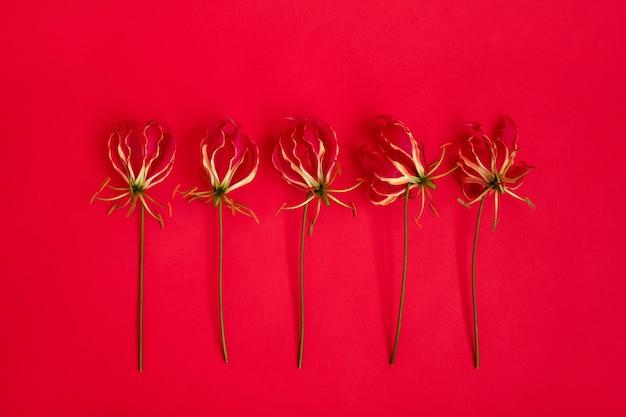 Pięć czerwonych kwiatów glariosa na czerwonym stole