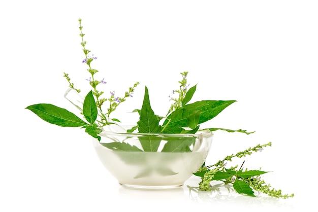 Pięć liści czyste drzewo lub vitex negundo kwiaty i zielone liście na białym tle.
