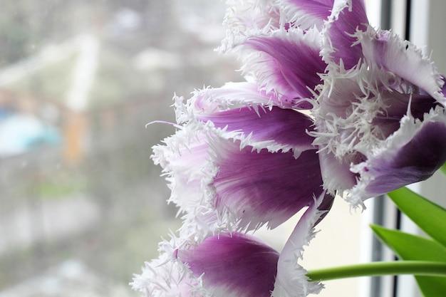Pięć purpurowy kwiat