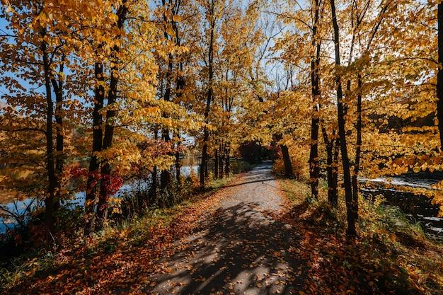 Piękna aleja w parku jesienią z kolorowymi drzewami