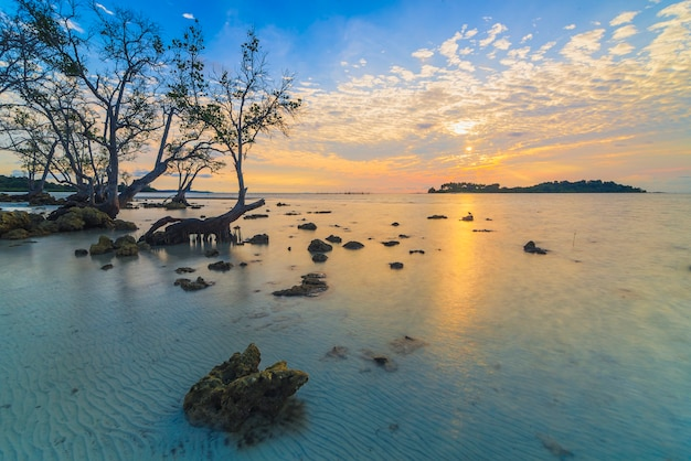 Piękna atmosfera wschodu słońca na plaży z drzewami namorzynowymi wzdłuż wybrzeża?