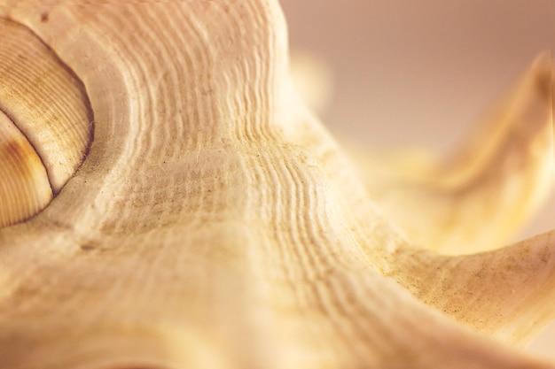 Piękna beżowa muszla na białym tle. fotografia artystyczna. selektywne skupienie. makro.
